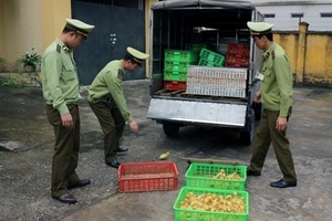 Quảng Ninh: Bắt giữ và tiêu hủy 2.500 con vịt giống nhập lậu