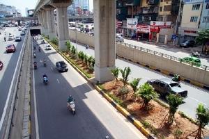 Cận cảnh hàng cau bụi dưới chân công trình đường sắt Cát Linh - Hà Đông.