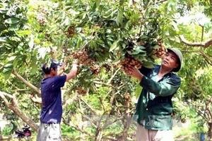 Huyện Khoái Châu: Phát triển đặc sản, thúc đẩy phát triển kinh tế bền vững