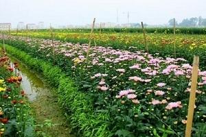 Huyện Mê Linh: Tập trung nguồn lực xây dựng Nông thôn mới giai đoạn 2016-2020