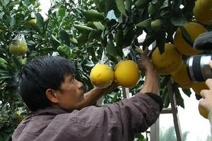 Video: CLB khuyến nông thôn Ngọc Bộ xây dựng thương hiệu nông sản sạch