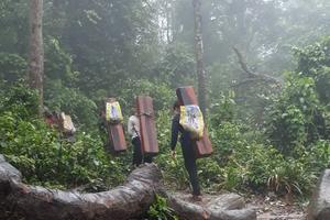 Lập tổ công tác liên ngành kiểm tra  thực trạng phá rừng tại Minh Hóa