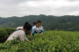 Cao Bằng: Nông nghiệp phát triển, nông thôn khởi sắc