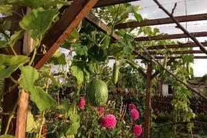 Thích mê khu vườn bình yên, xanh mướt mát của gia đình Việt ở Đức