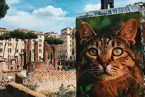 Những điểm đến 'bỗng' được yêu thích nhờ sự xuất hiện của mèo