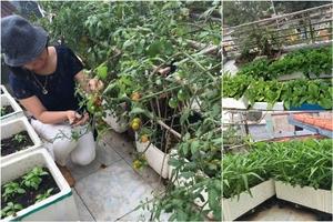 Sân thượng toàn rau quả sạch 'ăn không xuể' của bà mẹ bận rộn ở Hà thành