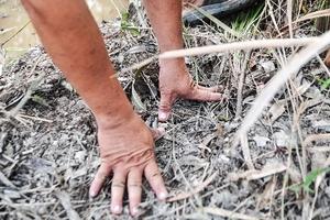 Đàn voi rừng vào rẫy tàn phá cây trái, nông dân lo lắng sợ 'mất Tết'