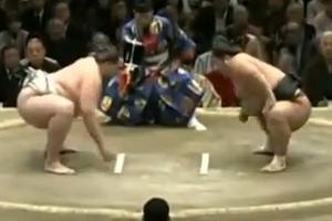 Sumo đánh nhau, trọng tài ngất