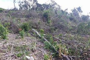 """Tân Kỳ (Nghệ An): Hàng chục héc ta rừng phòng hộ bị """"cạo trọc"""""""