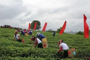Hội trà cao nguyên Mộc Châu lần thứ III năm 2018:  Quảng bá thương hiệu chè Mộc Châu