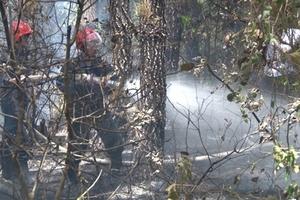 Huế: Huy động lực lượng dập tắt đám cháy rừng thông