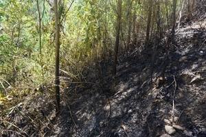 Hơn 100 người tham gia dập lửa cứu rừng giữa trưa