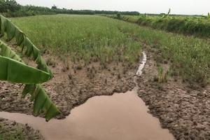 """UBND tỉnh Hải Dương có """"lách luật"""" khi biến đất nông nghiệp thành đất bãi bồi?"""