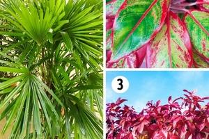 15 loại cây tốt nhất được khuyên trồng trong mỗi phòng vừa đẹp vừa cải thiện sức khỏe