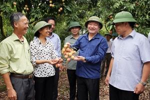 """Chủ tịch tỉnh Hưng Yên """"thị sát"""" tình hình phát triển nông nghiệp"""