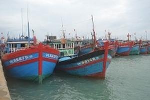 Cho tàu nằm bờ vì cá rớt giá