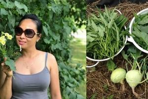 Vườn rau vừa ăn vừa biếu hàng xóm của nàng dâu Việt ở Mỹ