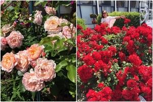 Vì yêu thích làm vườn, mẹ đảm quyết đào 10m2 sân gạch để trồng rau và hoa