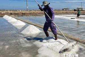 Giá muối ở Ninh Thuận tăng mạnh