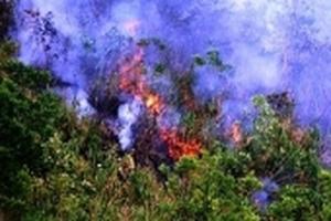 20ha rừng nguyên sinh bị thiêu rụi ở Quảng Nam