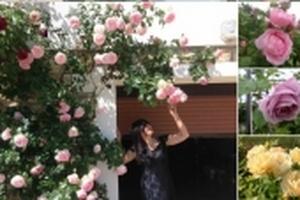 Ngắm mãi không chán khu vườn 'Triệu triệu đóa hồng' của mẹ Việt ở Pháp