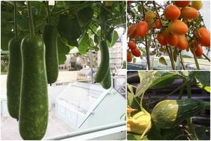Chàng trai trẻ thức khuya dậy sớm trồng bạt ngàn rau quả trên sân thượng 70m2