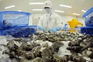 Kiểm soát dịch bệnh đối với tôm xuất khẩu sang thị trường Úc