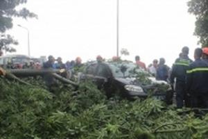 Ảnh hưởng bão số 10: Đã có 2 người chết và mất tích ở Huế