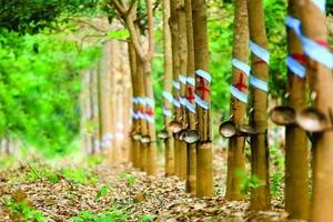 Việt Nam sẽ tham gia Hội đồng cao su Quốc tế nhằm ổn định giá cao su