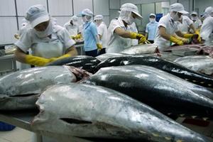 Pháp tăng nhập khẩu cá ngừ