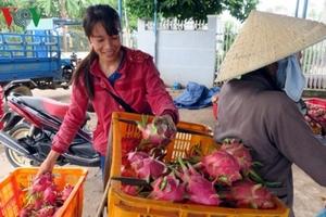 Lý giải giá thanh long Bình Thuận tăng kỷ lục