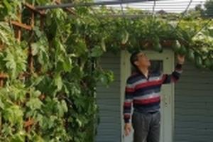 Ông bố Việt ở Đức biến khu vườn bỏ hoang ngập tràn rau xanh, trĩu quả