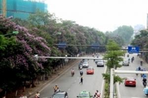 Phố Kim Mã 'lạ lẫm' khi những hàng cây tuyệt đẹp bị chặt hạ để nhường chỗ cho dự án đường sắt