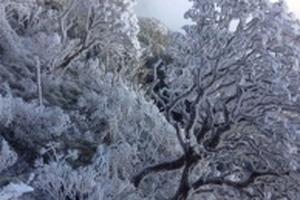 Dự báo thời tiết hôm nay 8/1: Miền Bắc bước vào đợt rét đậm kéo dài, có thể xuất hiện băng giá
