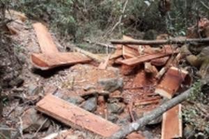 Đắk Lắk: Phá rừng quy mô lớn tại Vườn Quốc gia Yok Đôn