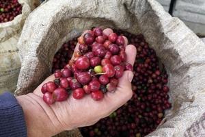 Giá cà phê hôm nay (24/3) giảm mạnh nhất từ đầu năm 2018