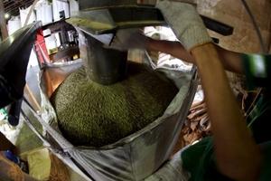 Giá cà phê hôm nay (26/3) vẫn giảm ở vài nơi, giá hồ tiêu phục hồi nhẹ