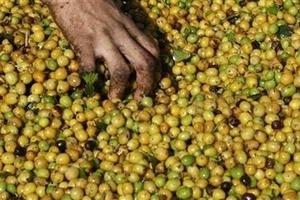 Giá cà phê hôm nay (3/5) tăng vượt 37.000 đồng/kg, robusta vượt 1.800 USD