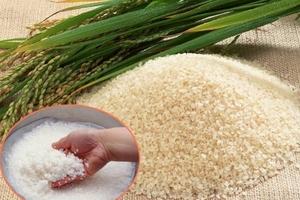 Gạo Việt - còn đó những nỗi lo