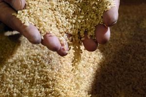 Trung Quốc mở 'một khe nhỏ' cho nhập khẩu gạo Nhật Bản