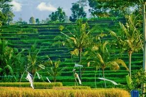 'Đưa nhau đi trốn' ở những địa điểm đẹp lung linh nhưng rất đỗi thanh bình ở đảo ngọc Bali