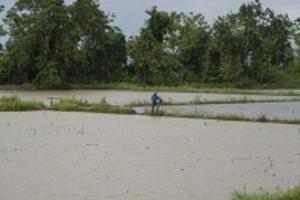 Nông dân Thái sẵn sàng mất trắng ruộng để giải cứu đội bóng khỏi hang