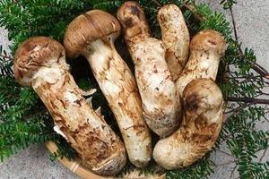Thị trường Hà Nội lại 'sốt' nấm nhập khẩu giá nửa cây vàng một kg
