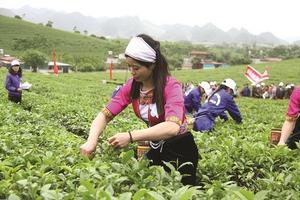 Mộc Châu và hướng phát triển du lịch dựa vào đặc sản Trà
