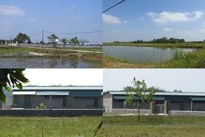 Trang trại trái phép của Tập đoàn Hoành Sơn, Hà Tĩnh: Vì sao khó xử lý?