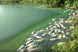 Phú Thọ: Kiểm tra hoạt động bảo vệ môi trường của Cty Hoà Phát