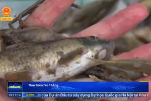 Lào Cai: Cá chết bất thường trên sông Hồng - Loại trừ nguyên nhân từ Việt Nam