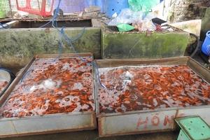 Tết ông Công ông Táo: Dân chuyển sang cúng cá giấy, cá chép vàng giảm giá 70% vẫn ế, người bán kêu trời