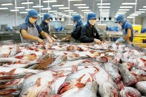 Kiểm soát chặt chẽ chất lượng cá tra, basa xuất khẩu sang Trung Quốc