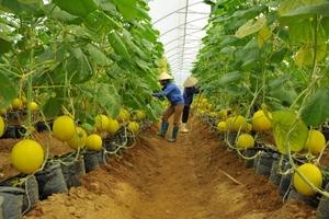 Ngày càng nhiều đại gia bất động sản bắt tay vào làm nông nghiệp